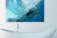 Baño metacrilato ejemplo oso polar