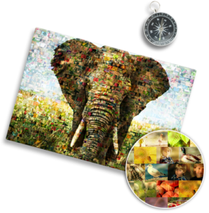 Mosaico de fotos ejemplo elefante
