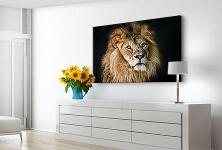 Salon foto aluminio dibond ejemplo retrato leon
