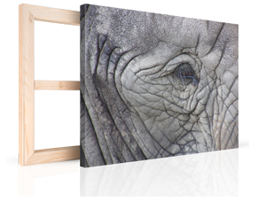 foto lienzo para navidad 4 ejemplo elefante